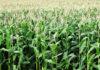 Skuteczna ochrona roślin